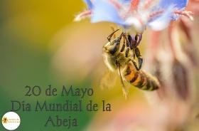 Cartel día munidal de las abejas