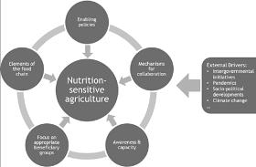 Gráfico de nutrition sensitive agriculture