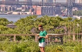 Imagen de agricultura urbana en Nueva York