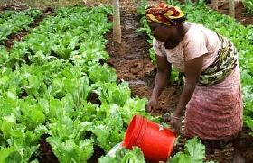 Ilustración de estas II Jornadas de Investigación Agraria para el Desarrollo
