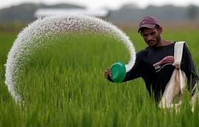 Aplicación de fertilizante en campo de arroz