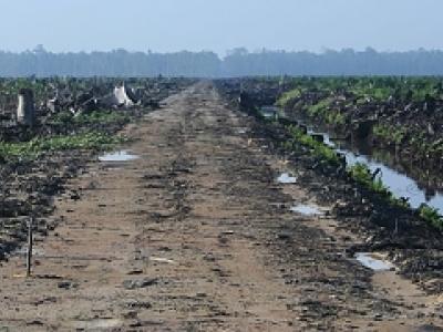 Imagen de bosques arrasados en Indonesia
